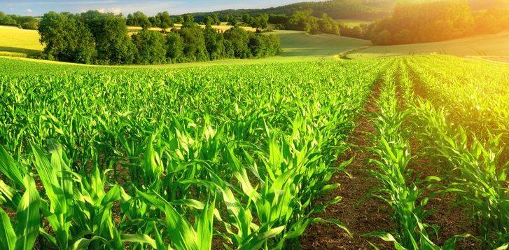 Agricultura Y Agronomía